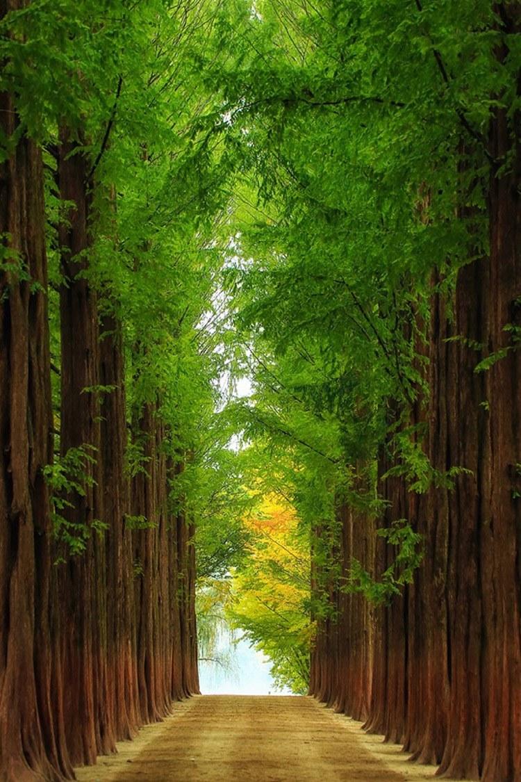 http://breezingby.tumblr.com/post/102592095504/sublim-ature-nami-island-south-korea-tiger-seo