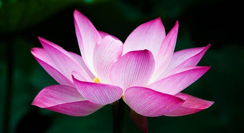 Thai-Good-Luck-Symbols